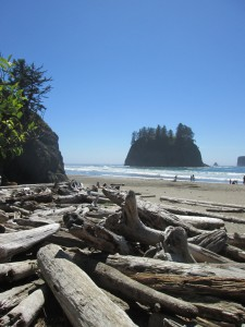 I made sure to take some time to explore La Push while I was out on the Olympic Peninsula